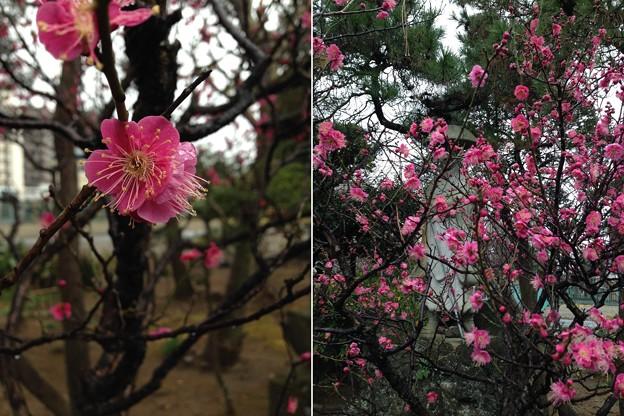 14.02.04.延命寺(葛飾区青戸)