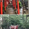 Photos: 鳩森八幡神社(千駄ヶ谷八幡神社。渋谷区)甲賀稲荷