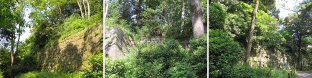 Photos: 金沢城(石川県営 金沢城公園)武者走り