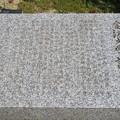 金沢城(石川県営 金沢城公園)金沢大学誕生地碑
