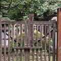 加賀藩前田家墓所(金沢市 野田山墓地)15代前田利嗣継室 朗子墓