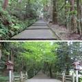 白山比咩神社(白山市)表参道