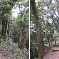 Photos: 大聖寺城(石川県加賀市)戸次丸・二の丸分岐