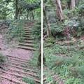 Photos: 大聖寺城(石川県加賀市)堀切
