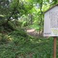 Photos: 大聖寺城(石川県加賀市)堀切・馬洗池