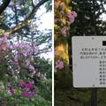 Photos: 19.05.15.大野城/亀山公園休憩所(大野市)土居利忠公像