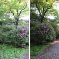 Photos: 大野城本丸(大野市)桝形?