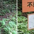 Photos: 一乗谷城(福井市)不動清水
