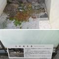 Photos: 北ノ庄城跡/柴田神社(福井市)堀跡・石垣