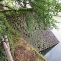 Photos: 福井城(福井市)本丸石垣