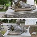 Photos: 劔神社(越前町)臥牛