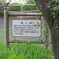 Photos: 金ヶ崎城(敦賀市)鴎ヶ崎