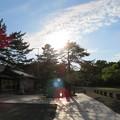 Photos: 氣比神宮(敦賀市)旗掲松