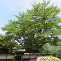 明通寺(福井県小浜市)客殿