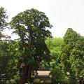 Photos: 若狭姫神社(若狭彦神社下社。小浜市遠敷)社叢