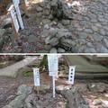 Photos: 若狭姫神社(若狭彦神社下社。小浜市遠敷)陽石・陰石・子種石