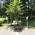 若狭姫神社(若狭彦神社下社。小浜市遠敷)上宮遥拝所