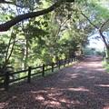 Photos: 高浜城(高浜町)堀切跡