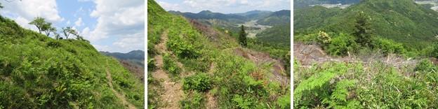 Photos: 黒井城(兵庫県丹波市)東側犬走り ・下、東の丸