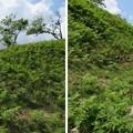 黒井城(兵庫県丹波市)東側犬走り・本郭堀切