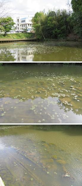 Photos: 亀山城/南郷公園(亀岡市)南郷池内