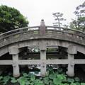 11.06.20.鶴岡八幡宮(鎌倉市)太鼓橋