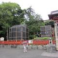 Photos: 11.06.20.鶴岡八幡宮(鎌倉市)大銀杏跡