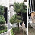 旧東海道中 品川新宿(品川区北品川)藤沢宿の兄弟松