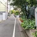 Photos: 御殿山通り(品川区北品川)