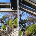 Photos: 12.01.30.品川神社(品川区北品川)