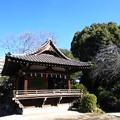 Photos: 12.01.30.品川神社(品川区北品川)神楽殿