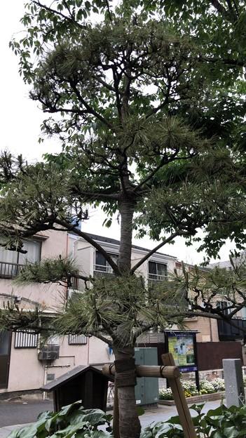 品川北本宿/品海公園(品川区北品川)