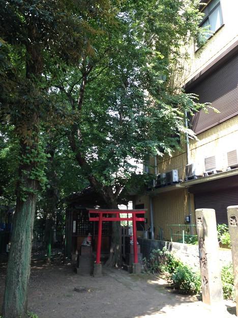 Photos: 13.07.10.南品川諏方神社(南品川)茶ノ木稲荷社