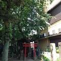 13.07.10.南品川諏方神社(南品川)茶ノ木稲荷社