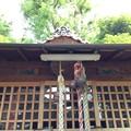 Photos: 13.07.10.鮫洲八幡神社(品川区東大井)末社 出世稲荷神社