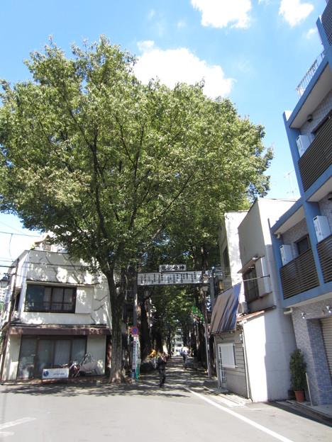 鬼子母神大門(豊島区)欅並木