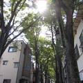 Photos: 鬼子母神大門(豊島区)欅並木
