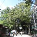 Photos: 鬼子母神大門(豊島区)表参道
