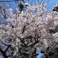 Photos: 12.04.04.法明寺(豊島区南池袋)参道