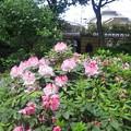 Photos: 12.05.16.沼袋氷川神社(中野区)