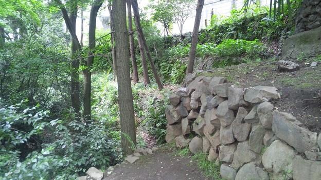 江古田公園(中野区松が丘)