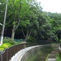 西原橋(中野区江古田)より西