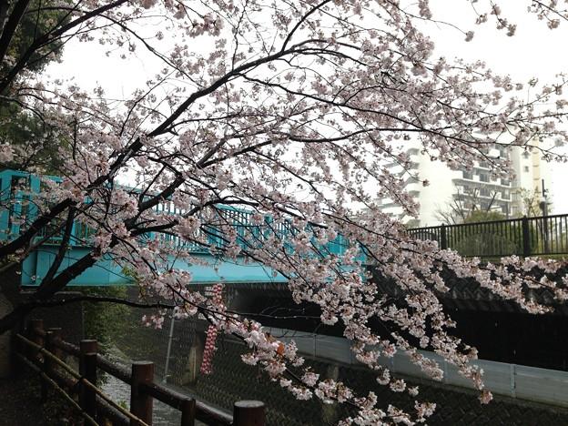 13.04.02.哲学堂公園(中野区)