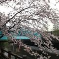 Photos: 13.04.02.哲学堂公園(中野区)