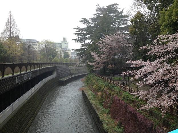 13.04.02.哲学堂公園(中野区)妙正寺川