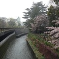 Photos: 13.04.02.哲学堂公園(中野区)妙正寺川