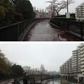 Photos: 13.04.02.妙正寺川公園(中野区)妙正寺川第一調整池
