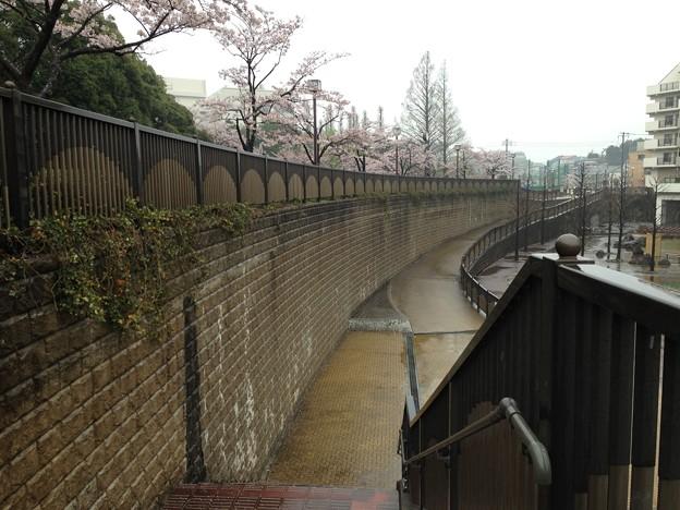 13.04.02.妙正寺川公園(中野区)