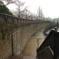 Photos: 13.04.02.妙正寺川公園(中野区)