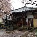 Photos: 13.04.02.新井薬師(中野区新井)不動堂